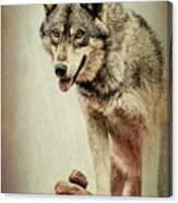 Wolf Wonder Canvas Print