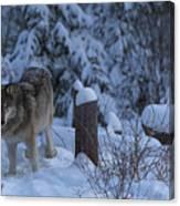 Wolf Wonderland Canvas Print
