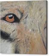 Wolf's Gaze Canvas Print