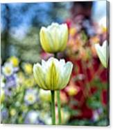 Photographer Behind The Flowers Canvas Print