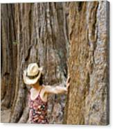 Woman Leaning On Giant Sequoia Tree Canvas Print