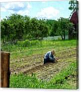 Woman Planting Garden Near Barn Canvas Print