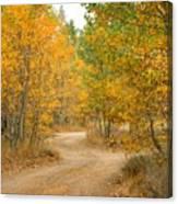 Wonder Filled Path Canvas Print