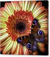 Wonderful Butterfly On Daisy Canvas Print