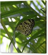 Wonderful Look At A Tree Nymph Butterfly In Foliage Canvas Print