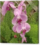 Wonderful Orchid Canvas Print