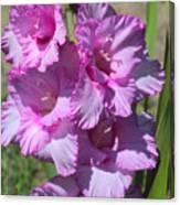 Wonderful Pink Gladiolus Canvas Print