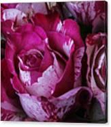 Wonderful Pink Red Rose Canvas Print