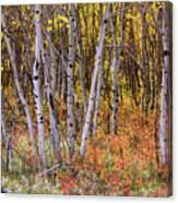 Wonderful Woods Wonderland Canvas Print