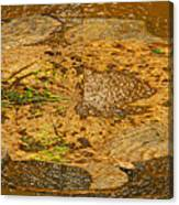 Wood Abstracted Canvas Print