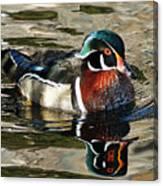 Wood Duck 1 Canvas Print