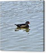 Wood Duck 2 Canvas Print