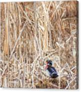 Wood Duck Drake 2 Canvas Print