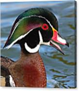 Wood Duck Drake Calling In Spring Courtship Canvas Print