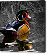 Wood Duck Drake Canvas Print
