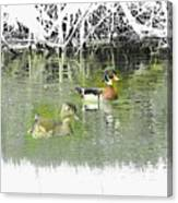 Wood Duck Pair Swimming. Canvas Print