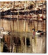 Wood Ducks Enjoying The Pond Canvas Print