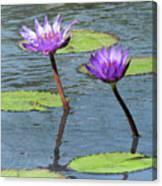 Wood Enhanced Water Lilies Canvas Print