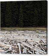 Wood Forest At Duffy Lake Canvas Print