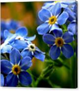 Wood Forget Me Not Blue Bunch Canvas Print