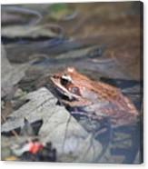 Wood Frog  Canvas Print