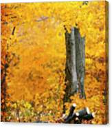Wood Pile In Autumn Canvas Print