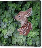 Wood Sorrel Blanket Canvas Print
