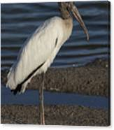 Wood Stork In The Final Light Of Day Canvas Print