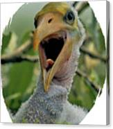 Wood Stork Nestling Canvas Print