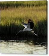 Wood Stork Winged Flight Canvas Print