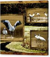 Wood Storks Of Oak Grove Island Canvas Print