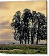 Woodburn Oregon - Sky Lights Canvas Print