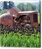 Woodburn Oregon - Tractor And Field Of Tulips Canvas Print