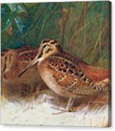 Woodcock In The Undergrowth Canvas Print