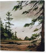 Wooded Shore Canvas Print