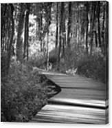 Wooded Walk Canvas Print