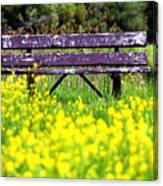 Wooden Bench Canvas Print