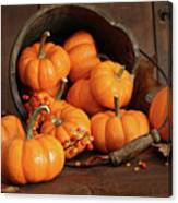 Wooden Bucket Filled With Tiny Pumpkins Canvas Print