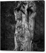 Wooden Face 2 Canvas Print