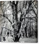 Woodland Fluff Canvas Print