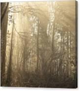 Woodland Glade 2 Canvas Print