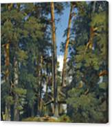 Woodland Grove Canvas Print