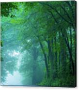 Woodland Mist Canvas Print