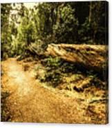 Woodland Nature Walk Canvas Print