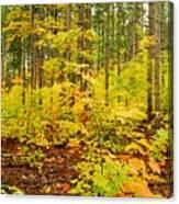 Woodland Panorama Canvas Print