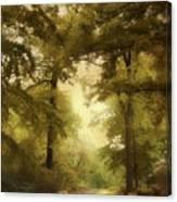 Woodland Passage Canvas Print