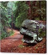 Woodland Path Naugatuck State Forest Canvas Print