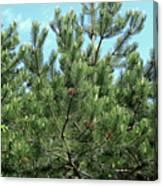 Woodland Pines Canvas Print