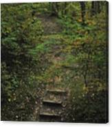 Woodland Steps Canvas Print