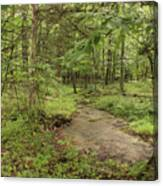 Woodland Strem Canvas Print